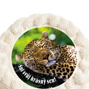 Jaguar_zvire_sm